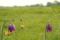 A view of the North Meadow, Cricklade, Wiltshire